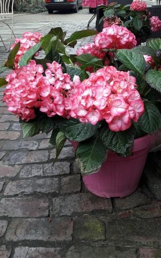 Außenblumen