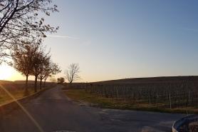 Abendsonne Weinberg