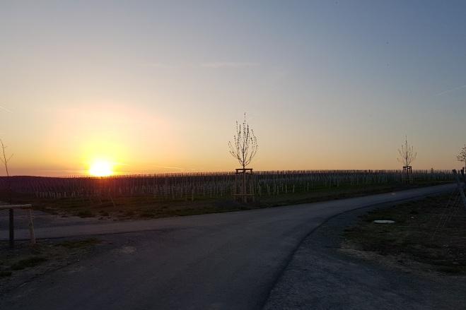 Sonnenuntergang Weininsel